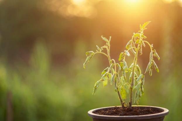 Comment ressusciter une plante presque morte