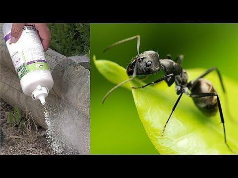 Comment se débarrasser naturellement des fourmis pour de bon